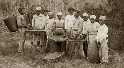 escravos-na-colheita-do-cafc3a9-rio-de-janeiro-rj-c-1882